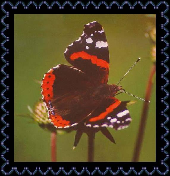 Форекс бабочка